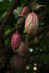 カカオ農家の指導から携わり、高品質のチョコレートを生み出すダリケー。