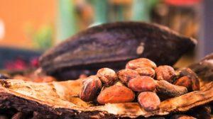 カカオ豆からドリンクが作られます。