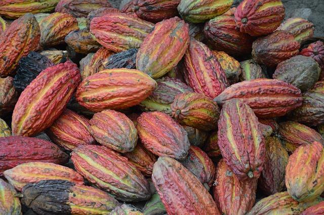 カカオ豆・美味しいチョコレートになるまでの秘密