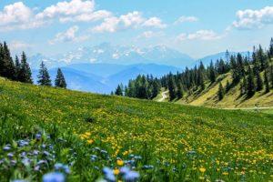 meadowとは牧草地という意味